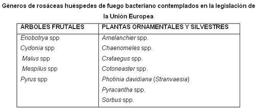 Géneros rosáceas huéspedes de fuego bacteriano en UE